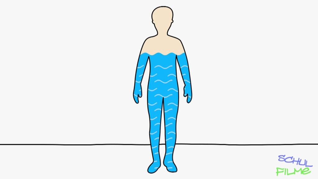 Tolle Menschliche Körper Harnsystem Bilder - Anatomie und ...